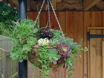DIY your own herbal hanging basket