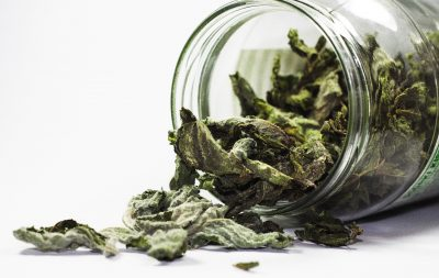 Dried mint - preserving fresh herbs at home by Katie Rushworth