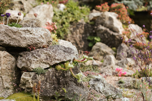 Creating an alpine scree garden