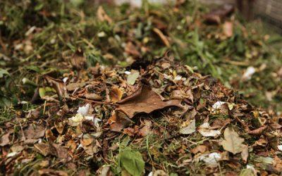 Minibeast bug hunt in your garden