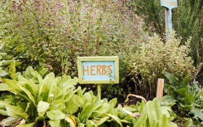 Creating a windowsill salad and herb garden