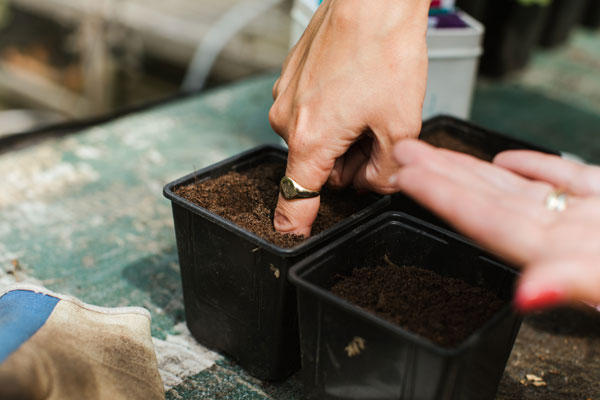 Katie Rushworth image of her sowing seeds