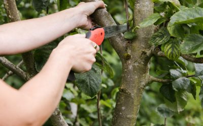 Autumn fruit tree care