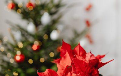 Three festive plant gift ideas