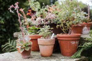 Container planting for small gardens by Katie Rushworth