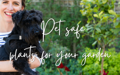 Pet safe plants for your garden
