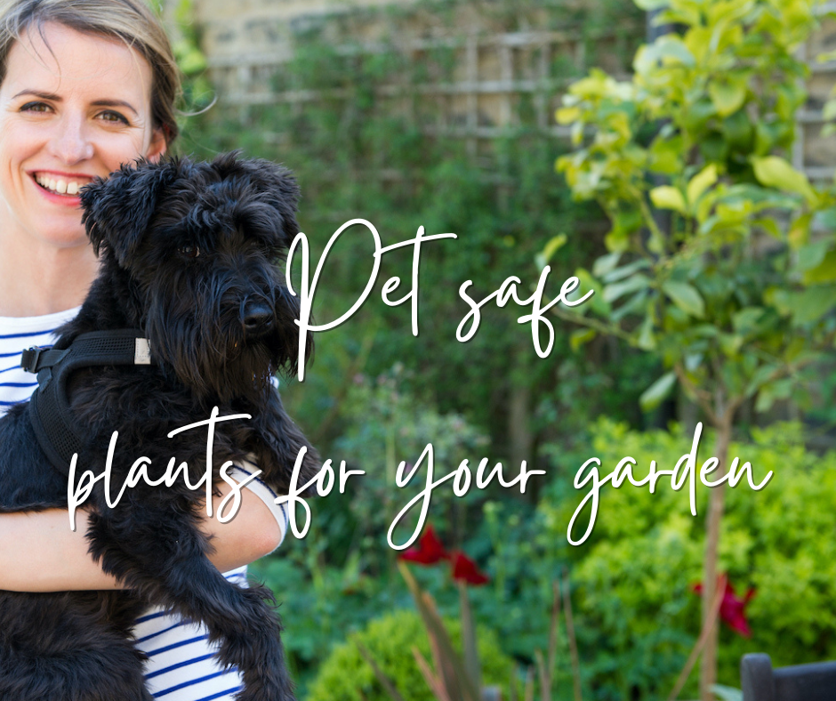 Pet safe plants for cats and dogs in your garden