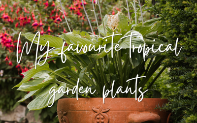 My favourite tropical garden plants