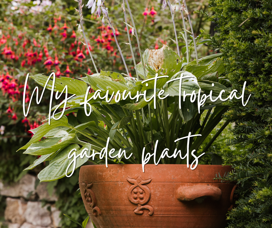 Tropical plants for your garden