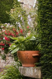 Hostas are a great low-growing tropical plant for your garden