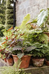 Plant in containers for easy-care low maintenance gardening