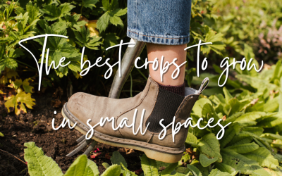 The best crops to grow in small spaces