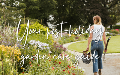 Your post-holiday garden care guide