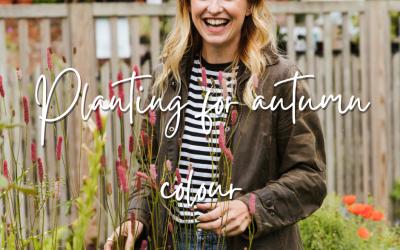 Planting for autumn colour