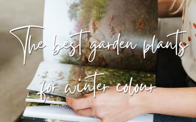 The best garden plants for winter colour